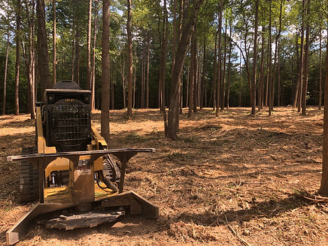 Forestry mulching to thin property.