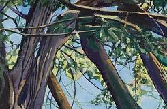 Wilmington Yew II - cropped 1.jpg