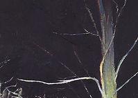 Nightwoods - cropped 1.jpg