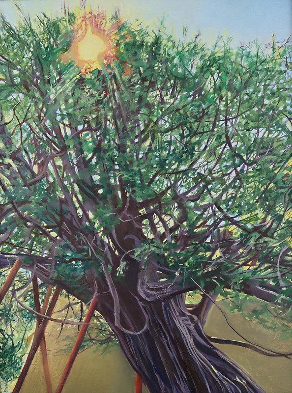 Wilmington Yew
