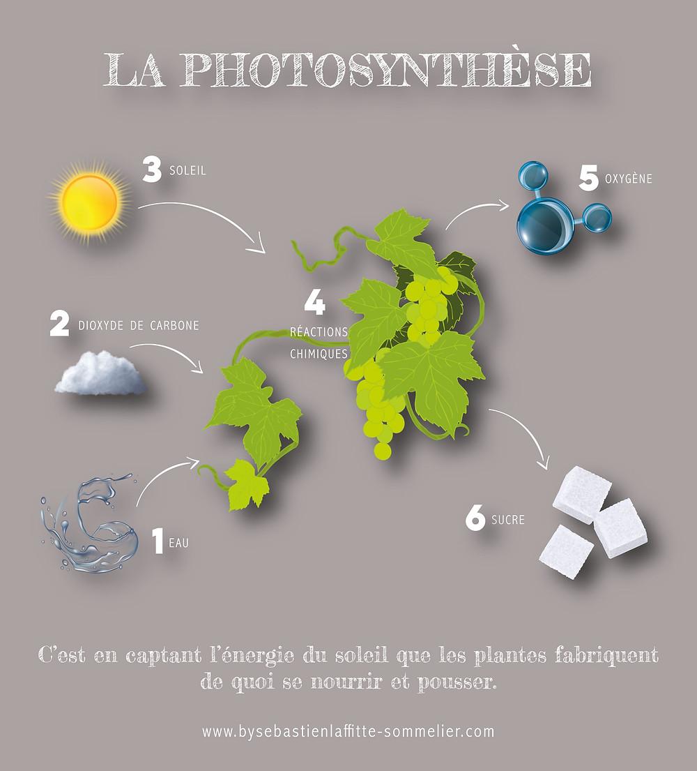 Illustration du post du cours de Chimie du blog de Sébastien Laffitte Sommelier