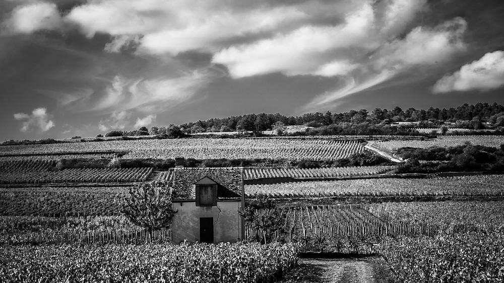 La Bourgogne - L'histoire du terroir. Pourquoi la Bourgogne est mono-cépage.