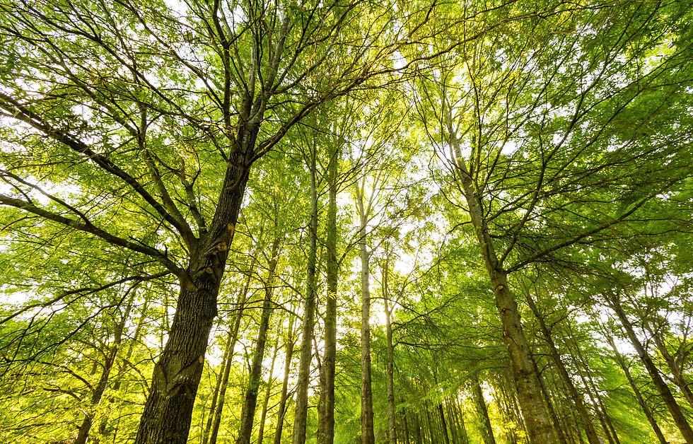 trees_small.jpg