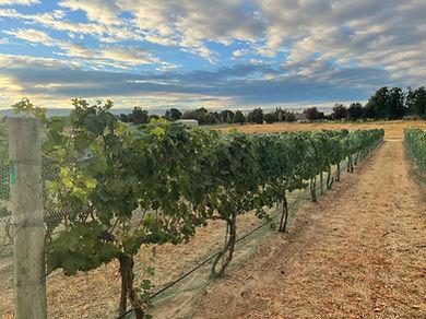 Equinox Ridge Harvest Morning 2021.JPG