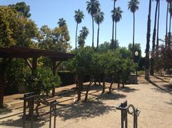 Sunkist Courtyard at Citrus Park