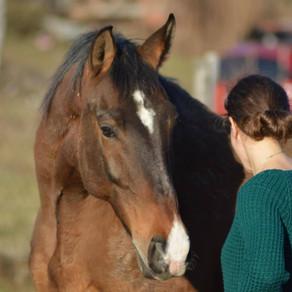 Kako konji uče?