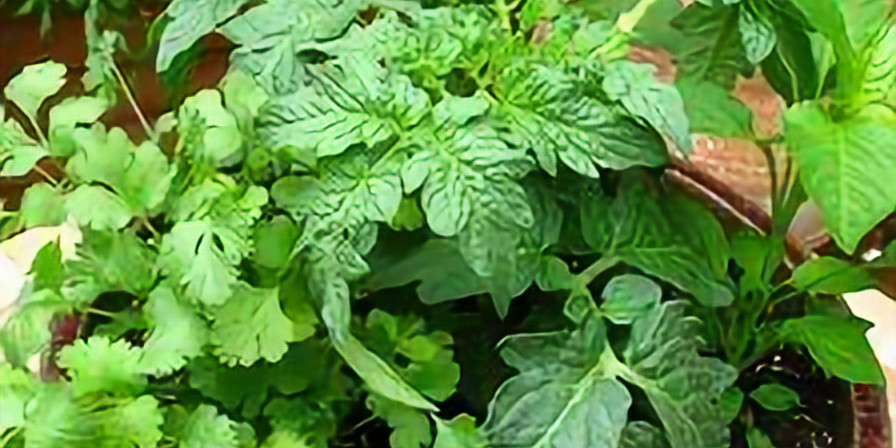 Veggie/Herb Pot Workshop