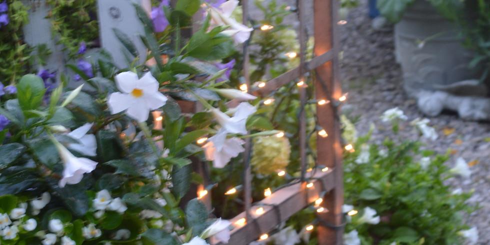 An Evening in a Moonlight Garden