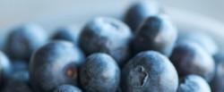 Bowl of Berries 2015-9-1-13:31:16
