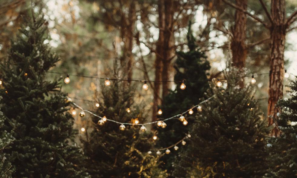 Christmas Tree Mini Dec. 5