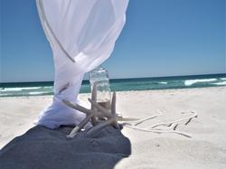 starfish wedding pic