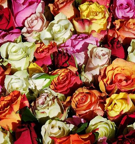 rosas_edited.jpg