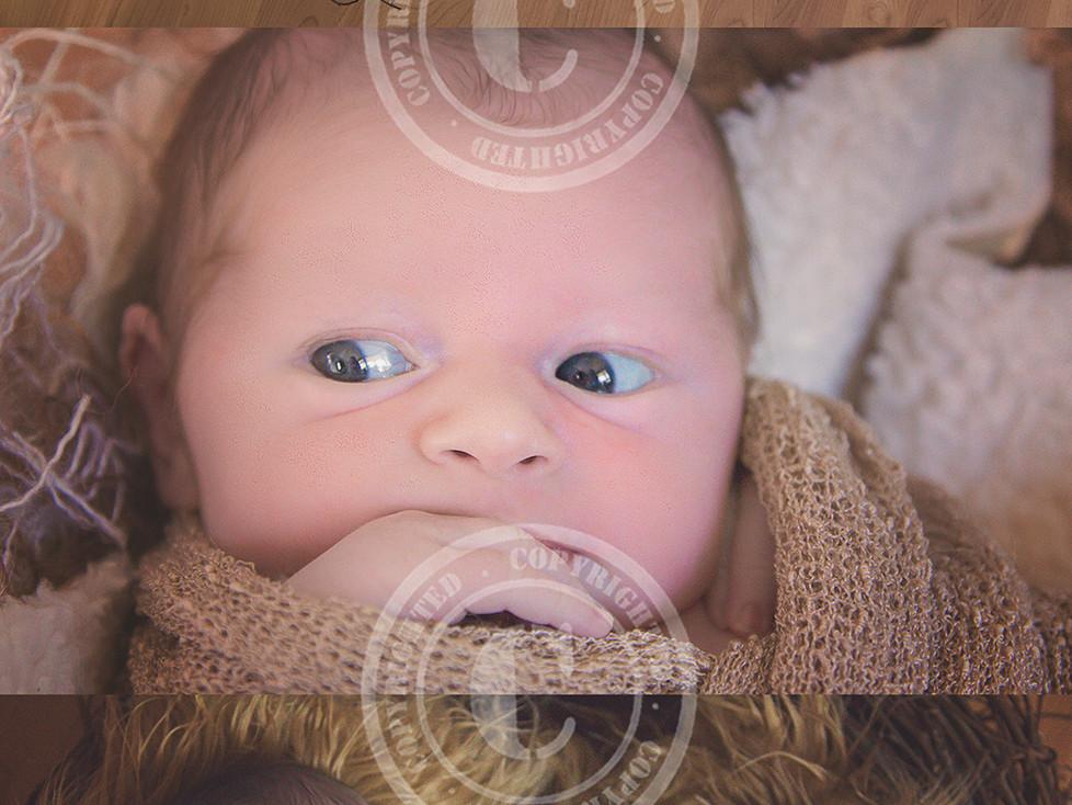 Baby Carter's Newborn Session