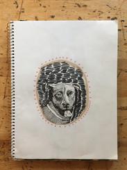 Apple Dog 1