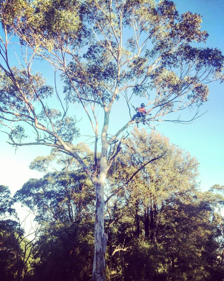 Gibbon Tree Specialists Climber 3