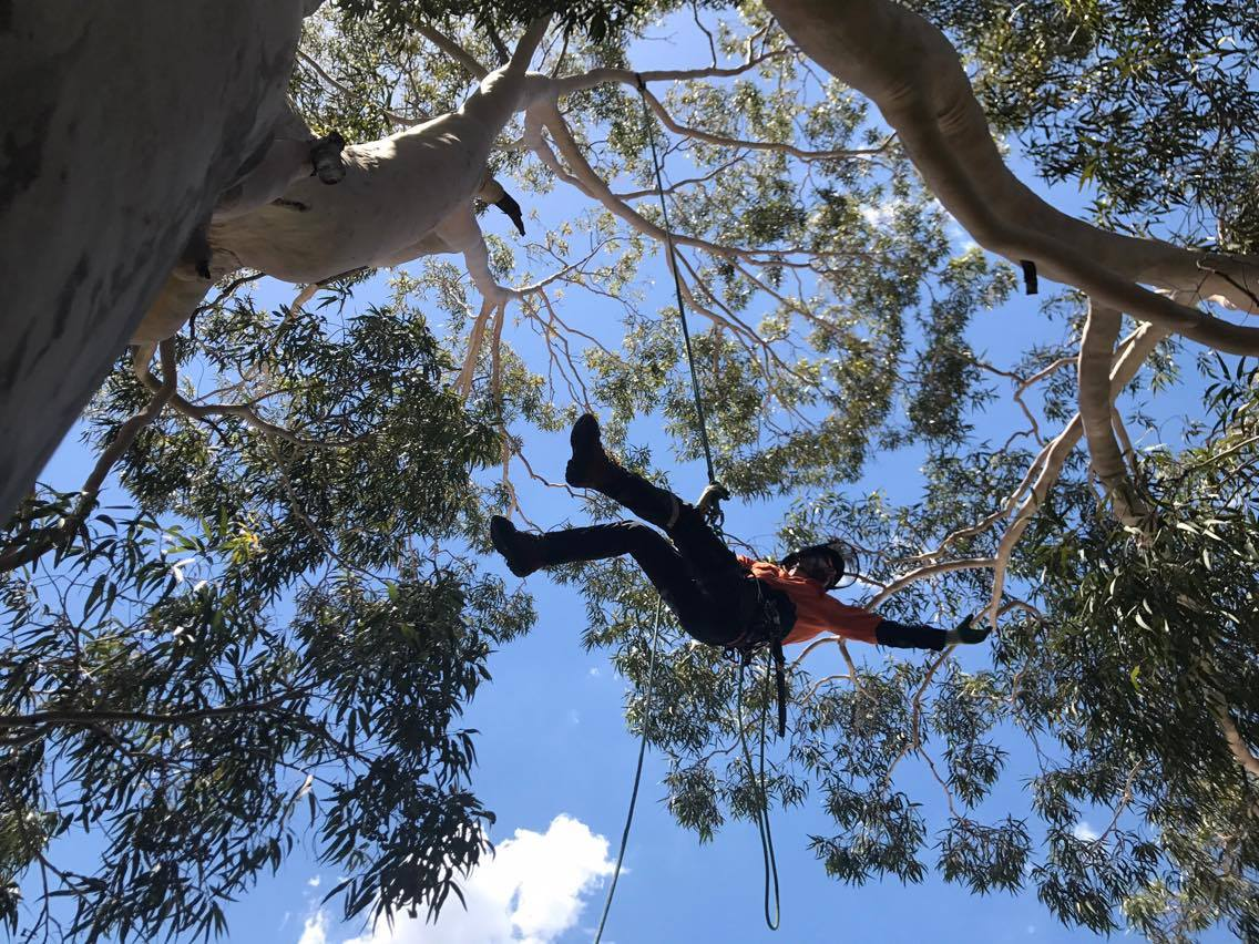 Gibbon Tree Specialists Climber 1