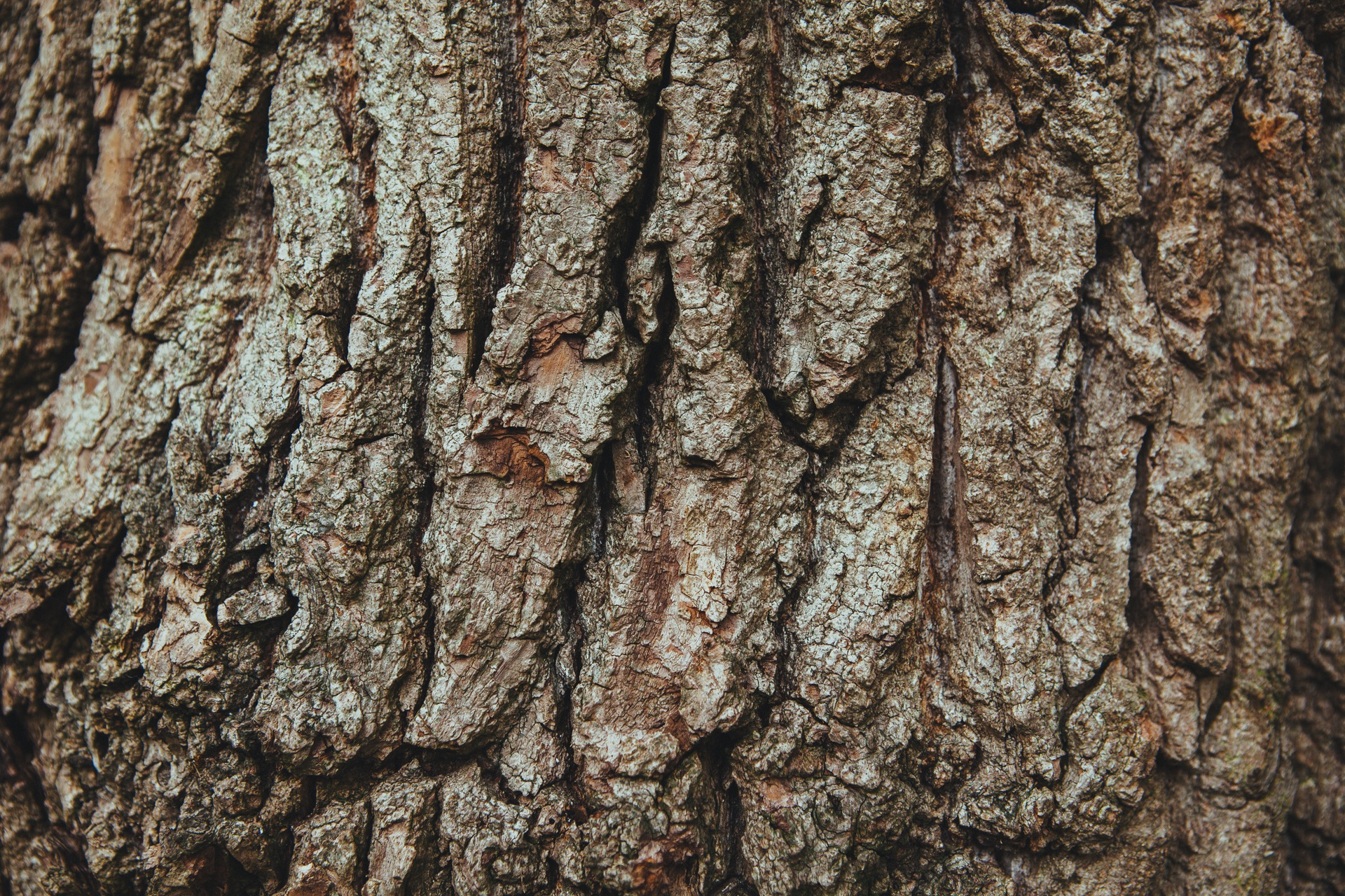 wood-tree-bark-english-oak