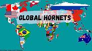 Global Hornets