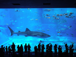 沖繩海洋博水族館.jpg