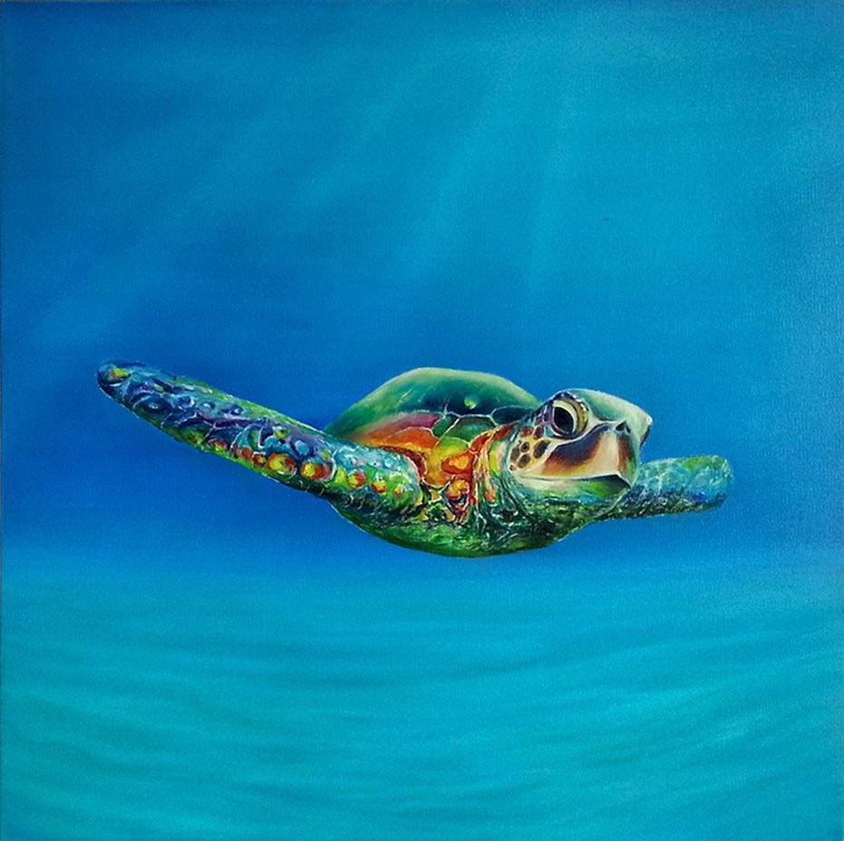 Return of sea turtle