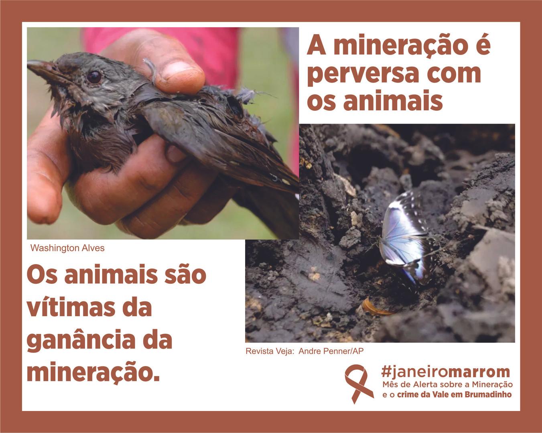 posts animais.jpg