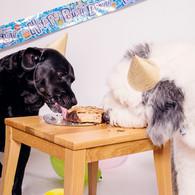 Pet Cake Smash