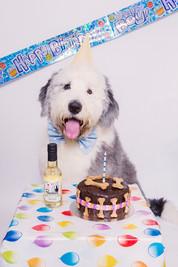 Puppy's first birthday