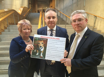 Kenneth Calls for Ban on Electronic Shock Collars