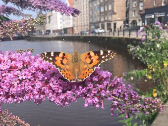 Urban Communities Receive £7,973,000 Boost For Nature Projects