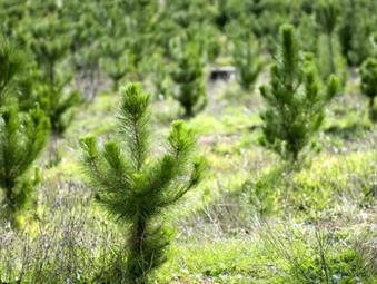 84% of UK Tree Planting in Scotland