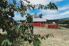 RachelleZelaneyPhotography-Mac Shack- Curlew Orchard