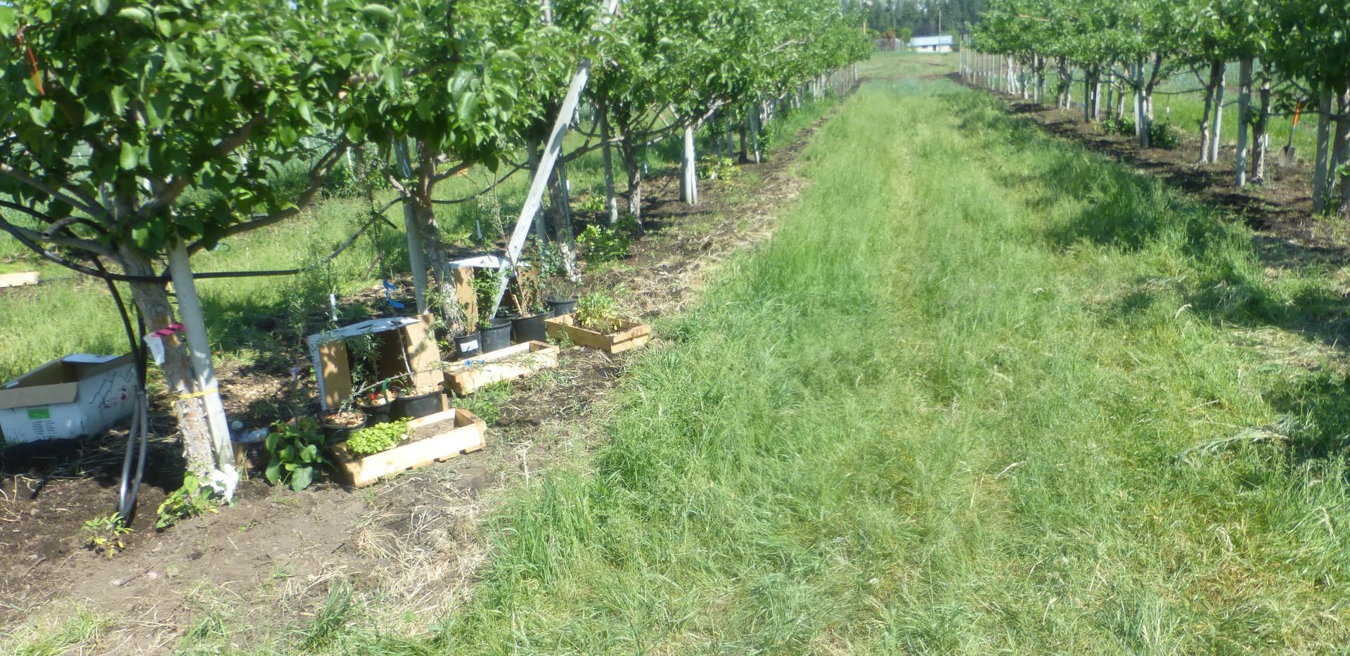 planting companion plants