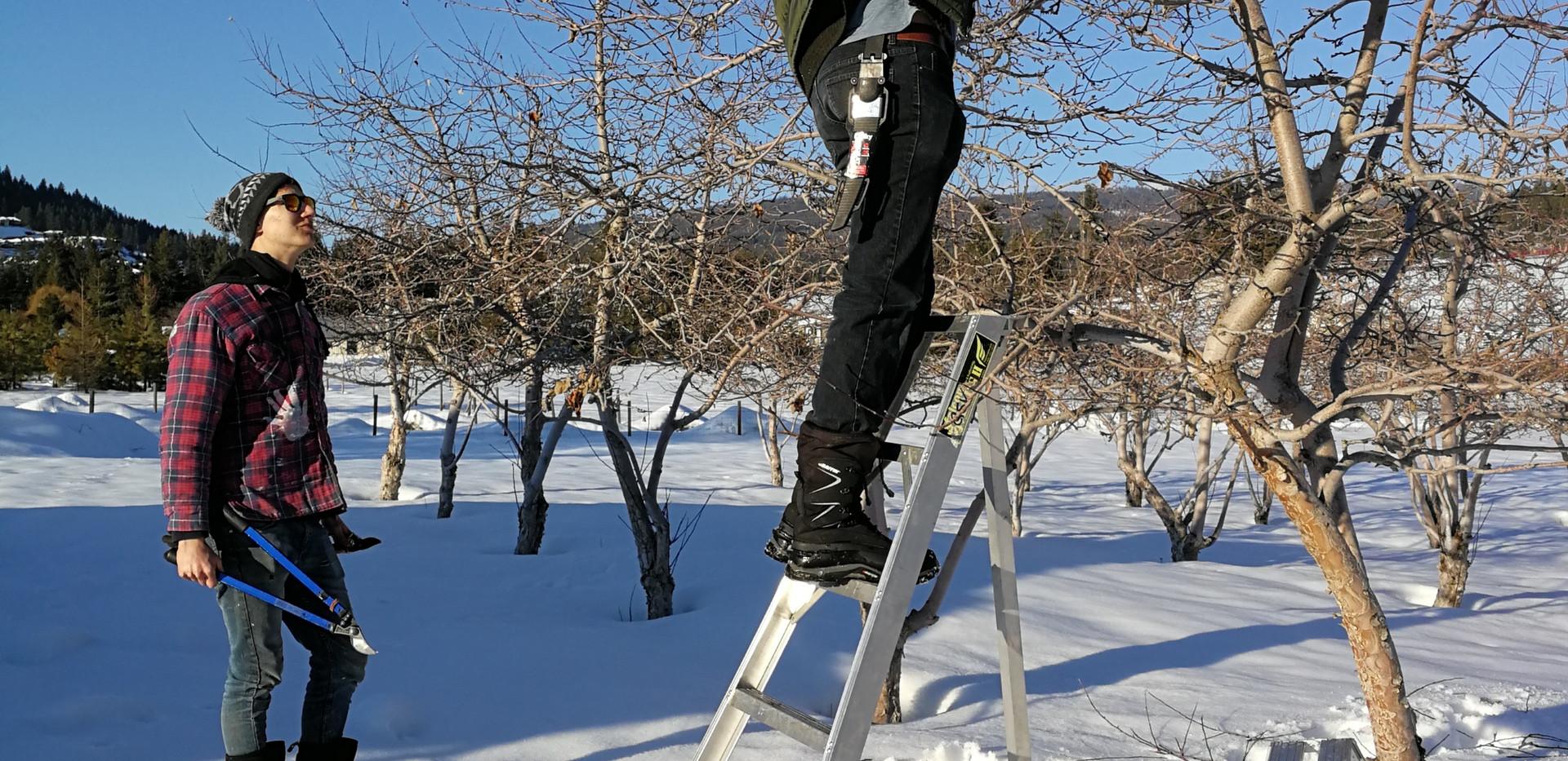 patrick pruning macs