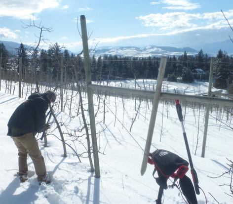cameron pruning.JPG