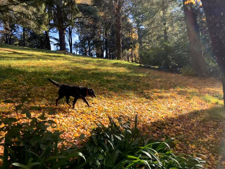 Exercise and the older dog