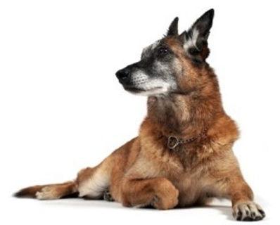 Pet Arthritis and Palliative Care