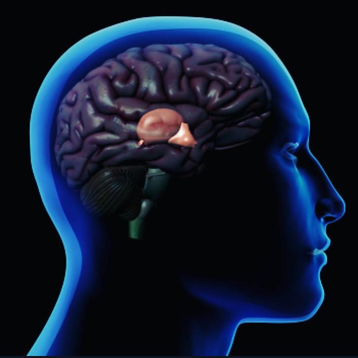 La glande pinéale, appelée aussi épiphyse est une glande endocrine du cerveau. Elle sécrète la mélatonine qui joue un rôle central dans la régulation des rythmes biologiques (veille/sommeil et saisonniers).  Malheureusement certaines substances que nous consommons calcifient cette glande et l'empêchent de fonctionner correctement.      Cette calcification est causée principalement par le fluorure qui vient des dentifrices (au fluor), de l'eau du robinet et de l'eau en bouteille, mais aussi de certains médicaments. Le fluorure de calcium semble le pire de tous car il est magnétiquement attiré par la glande pinéale où il forme des cristaux de phosphate de calcium. Le mercure s'avère aussi très mauvais. Tous les vaccins médicaux en contiennent et il est très difficile à éliminer du cerveau une fois qu'il y est. On en trouve également dans les poissons et autres crustacés de fonds marins. Finalement, certains pesticides sont également responsables de cet entartrage.  Plus la pinéale est calcifiée, moins elle secrète de mélatonine. A la longue, cette calcification peut entrainer la dépression, l'anxiété, la boulimie, l'anorexie, la stérilité, l'insomnie, la baisse immunitaire etc.  La chromopuncture s'avère très efficace pour décalcifier cette glande. Cela nettoie par la même occasion tous les métaux lourds accumulés au long de notre vie.