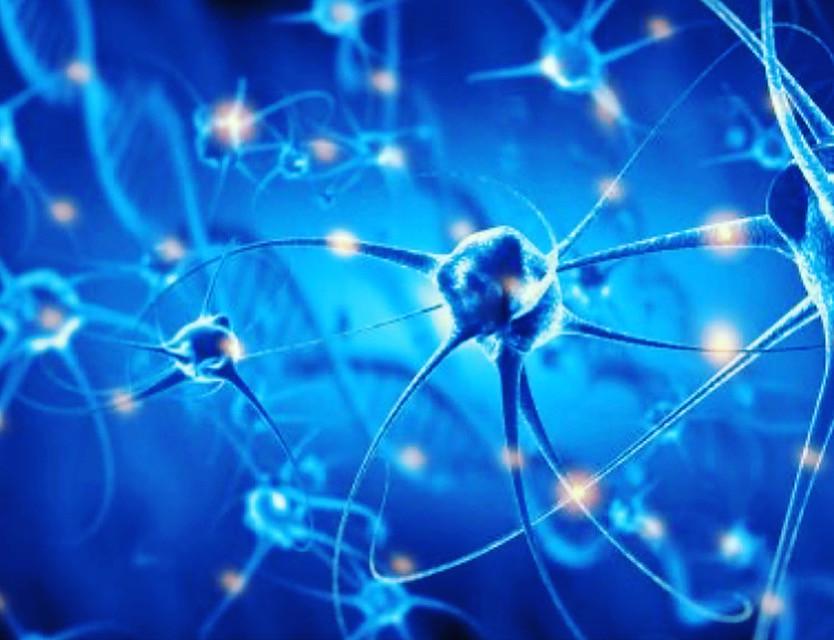 Les hormones sont des molécules produites par certains organes (notamment la thyroïde, le pancréas, les glandes surrénales, les ovaires et les testicules) qui voyagent dans le sang. Elles vont délivrer une information générale en direction de toutes les cellules du corps. L'hypothalamus est le chef d'orchestre de cette incroyable symphonie.