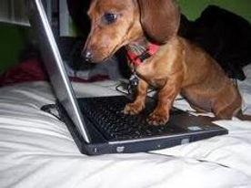 dachshund on computer.jpg