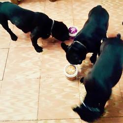 _Ya llegó nuestro pedido de Petmet Naturals!!_ Felices esta hermosa familia formada por la mamá Neix