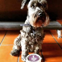 Chobby guapísimo! #dogsofinstagram #instadog  #dog #guapo #perritofeliz