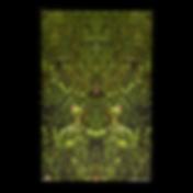 DeepForest_Butterfly_display.png