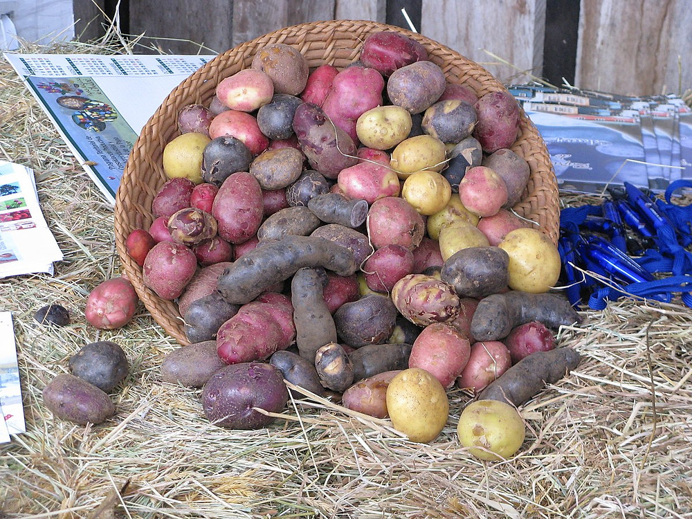 Potatoes of all colors from Chiloe