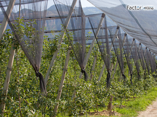 "Conheça o Relatório ""Fruit, Tree Nut, and Vegetable Plant Protection Market: U.S. Market Analys"