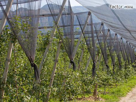 "Conheça o Relatório ""Fruit, Tree Nut, and Vegetable Plant Protection Market: U.S. Market Analys"