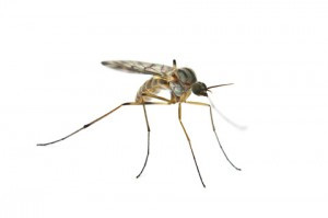 Mosquito Control Insecticides Market is Forecast to Spike Driven by the Zika Threat