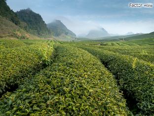 Como usar os Programas de Proteção Agrícola Para Tornar a Sua Empresa Mais Competitiva