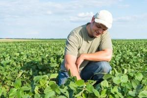 O mercado norte-americano de adjuvantes para pesticidas