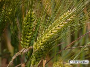 O Crescimento de Produtos Biológicos Será Atrapalhado Pelo COVID-19?