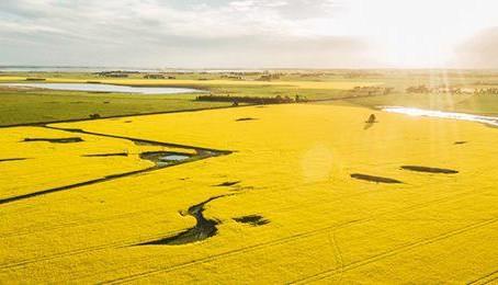 O mercado de tratamento de sementes na Austrália